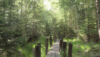 Durch eine kleine Brücke in einem Wald ziehen