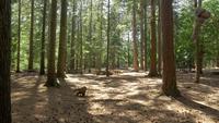 An einem sonnigen Tag durch einen Wald zu Picknickbänken