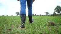 L'arrière du fermier va dans des bottes en caoutchouc sur un champ vert