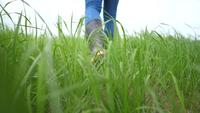 Los agricultores usan botas para caminar sobre la hierba en sus granjas.