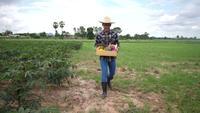 Los agricultores traen cajas de verduras para entregar a los clientes.