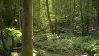 Paisaje de un arroyo entre plantas verdes en la jungla