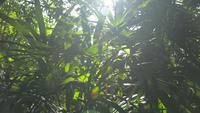 Exuberantes árboles de follaje bajo la luz del sol en un bosque tropical