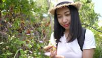 Asian woman smells the flowers in the forest.