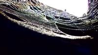 Regendruppels op een spinnenweb