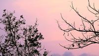 Silhouet van bomen boven een avondrood