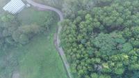 Route forestière de montagne