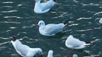 Mouettes d'oiseaux animaux