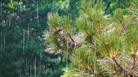 Baumblätter und der Regen