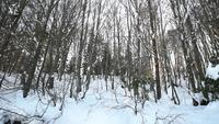 Floresta com neve em Bolu, Turquia