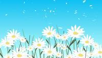 Fleurs de marguerite dansant dans le vent