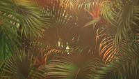 Summer jungle background