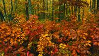 Feuilles d'automne dans une forêt