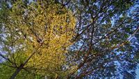 Grands arbres verts