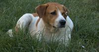 Streunender Hund auf dem Gras