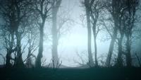 Halloween forêt sombre et brouillard