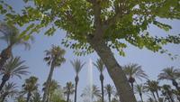 Fontän avslöjar skott till och med palmer i Spanien, Ibiza, San Antonio