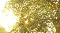 Gold Morning Tree