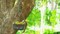 Braunes Eichhörnchen isst Früchte