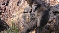Mono en la naturaleza