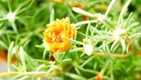 Die Blume blüht im Frühjahr