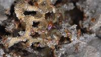 Vue de dessus macro des termites