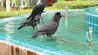 Krähen im Brunnen
