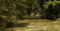 Hojas de río y árboles