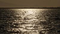 Måser som flyger på stranden vid solnedgången