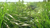 Groen in de zonneschijnachtergrond