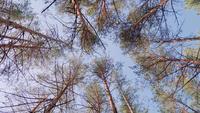 Schöner grüner Wald