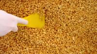 Cerrar la producción de maní