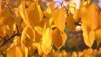 Geel blad in de herfst