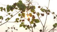 Soleil du matin à travers les feuilles