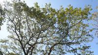 Grandes árboles en el bosque sobre fondo de cielo azul