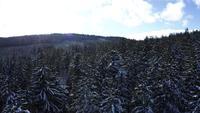 Besneeuwde bomen in 4K