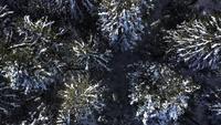 Luchtfoto van bovenaf van besneeuwde bomen in 4 K