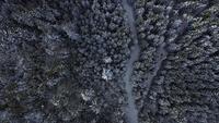 Luchtfoto van bovenaf van een besneeuwd bos in 4K