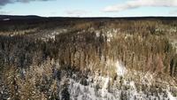 Luchtfoto van besneeuwde bossen in de bergen in 4K