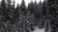 Volando hacia arriba y hacia atrás desde árboles nevados en 4K